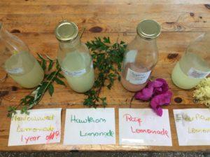 herbal kefirs